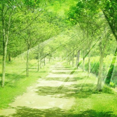 林の中の光
