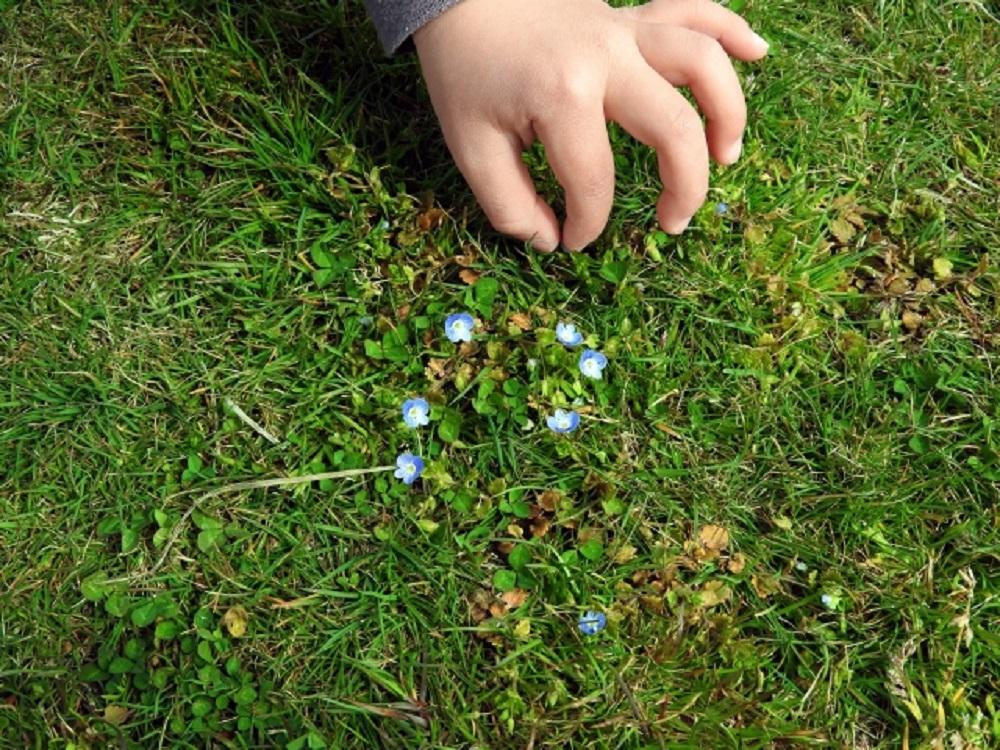 芝生に子供の手