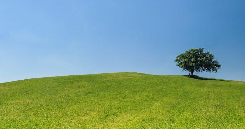 丘の上の木