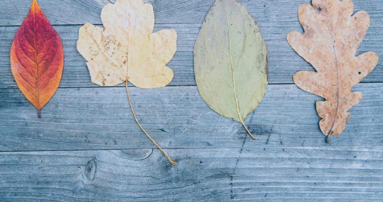 さまざまな色形の葉