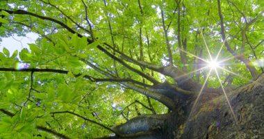 木の中の木漏れ日